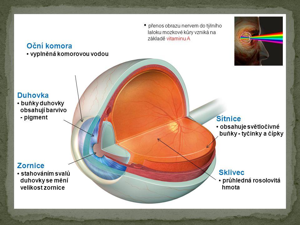 • přenos obrazu nervem do týlního