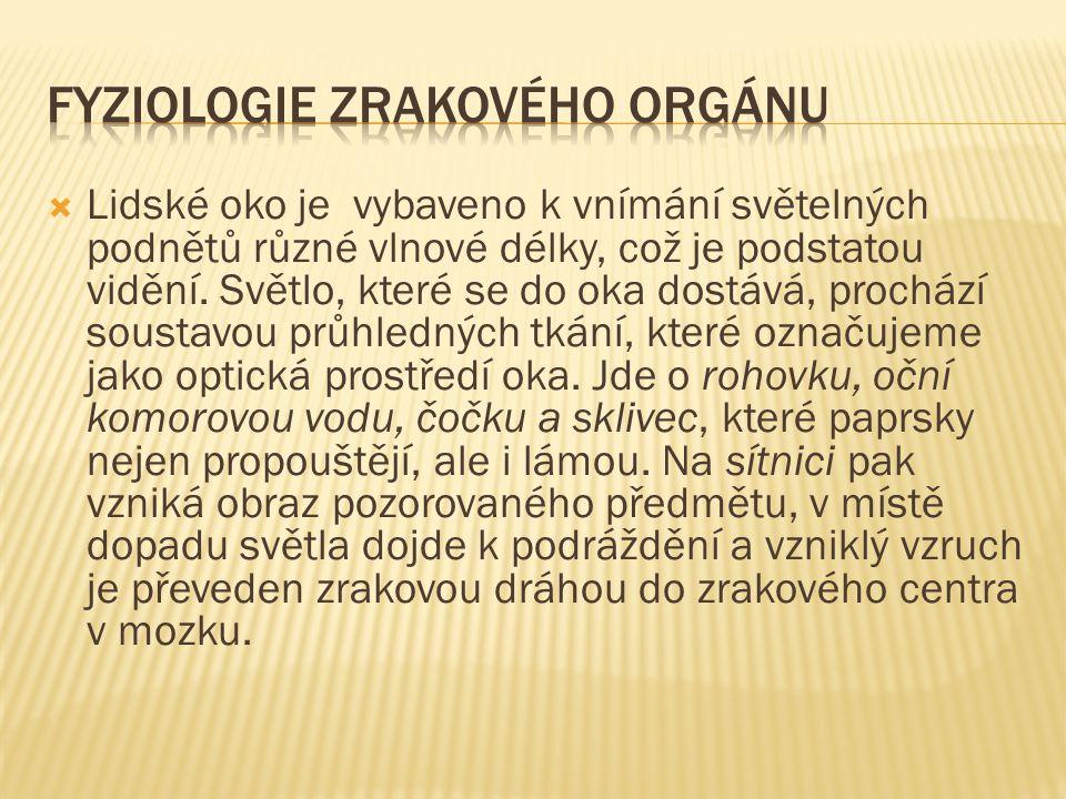 fyziologie zrakového orgánu