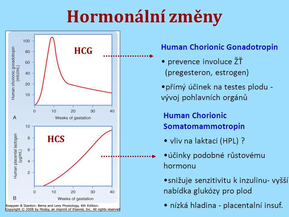 Hormonální změny HCG HCS Human Chorionic Gonadotropin