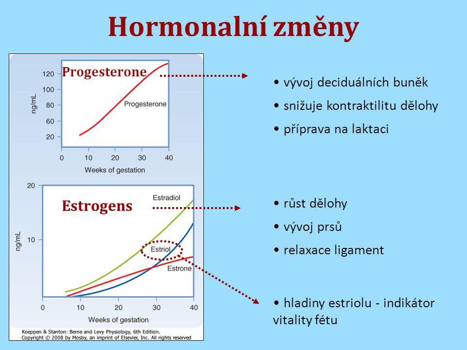 Hormonalní změny Estrogens vývoj deciduálních buněk