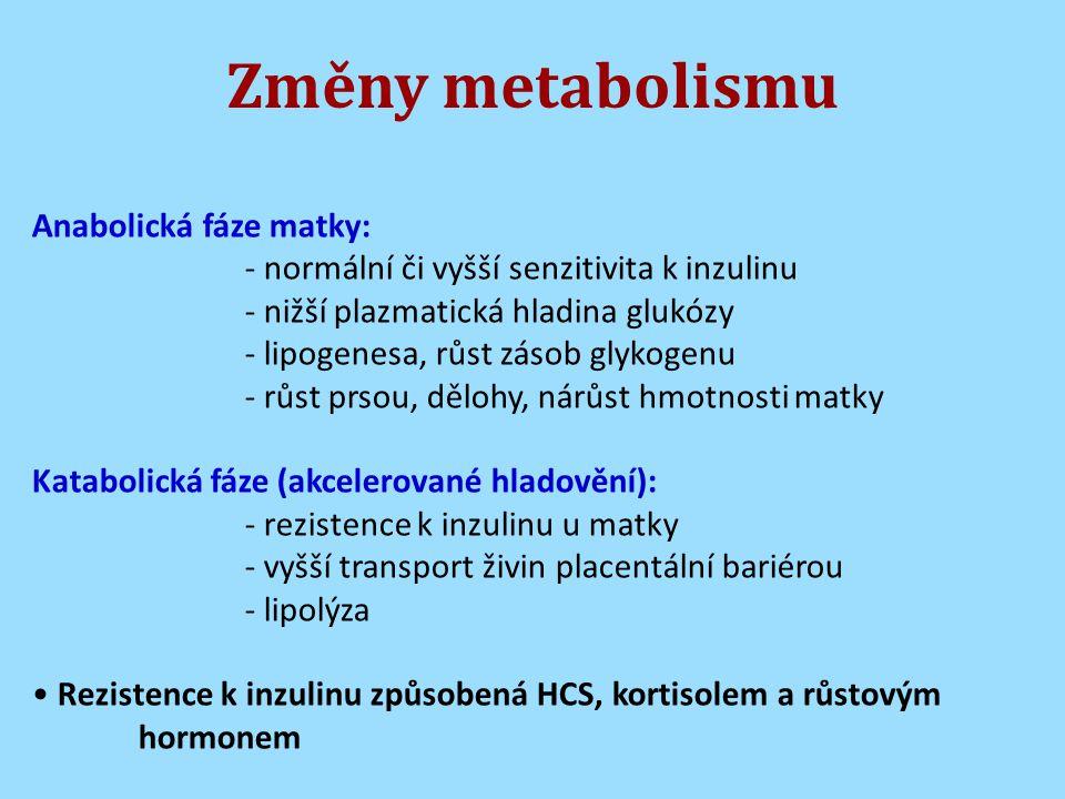 Změny metabolismu Anabolická fáze matky: