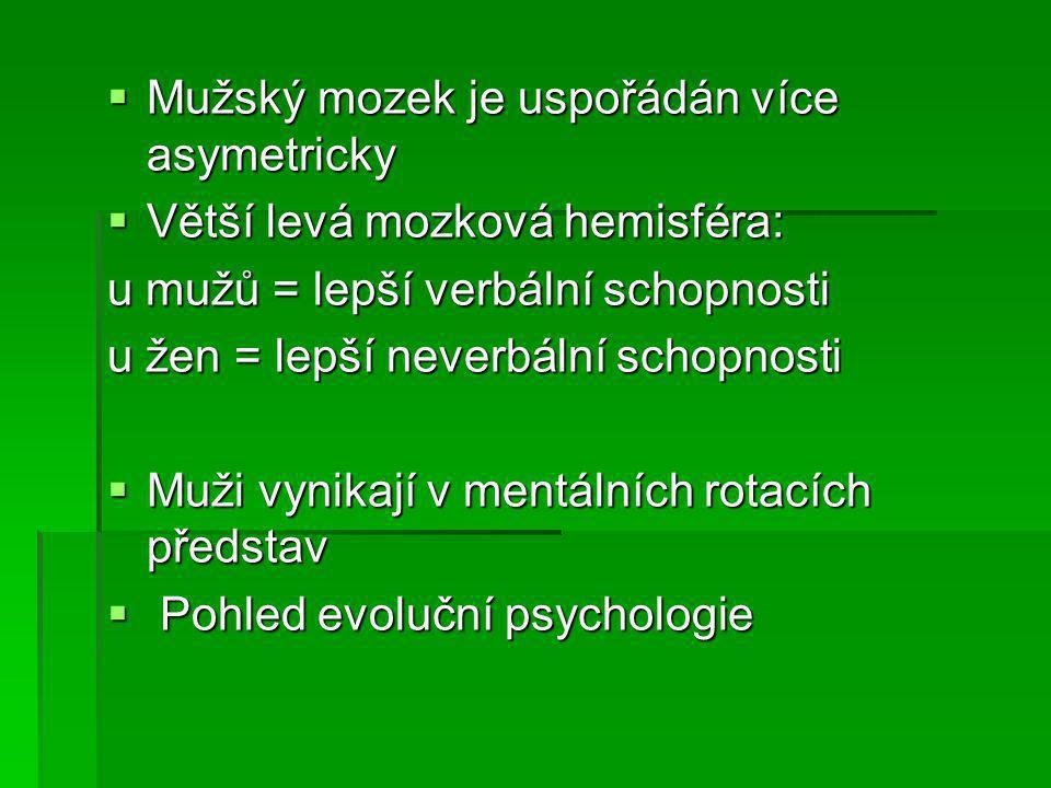 Mužský mozek je uspořádán více asymetricky