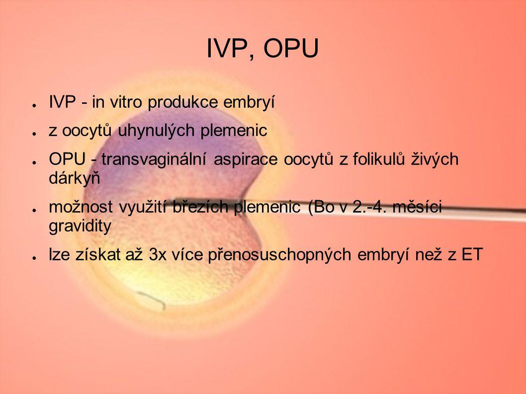 IVP, OPU IVP - in vitro produkce embryí z oocytů uhynulých plemenic