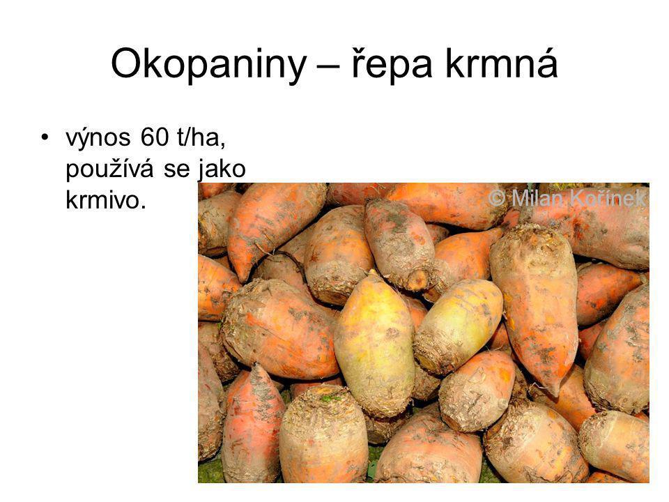 Okopaniny – řepa krmná výnos 60 t/ha, používá se jako krmivo.