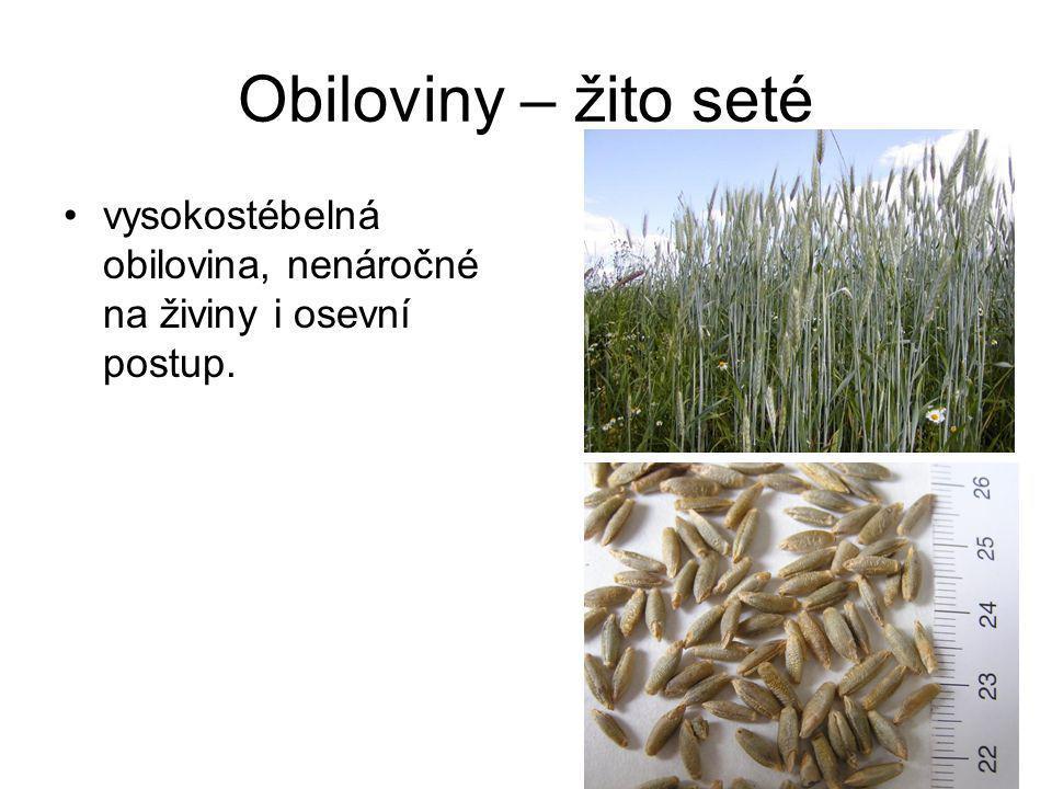 Obiloviny – žito seté vysokostébelná obilovina, nenáročné na živiny i osevní postup.