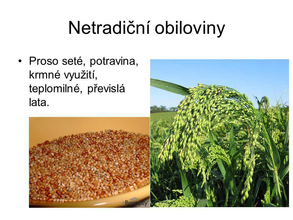 Netradiční obiloviny Proso seté, potravina, krmné využití, teplomilné, převislá lata.