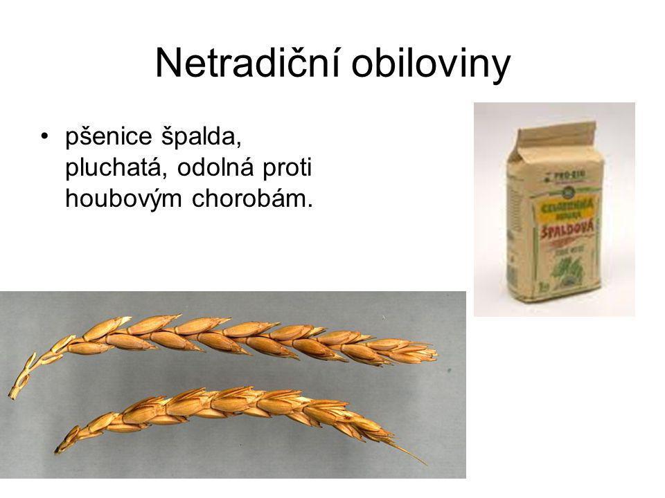 Netradiční obiloviny pšenice špalda, pluchatá, odolná proti houbovým chorobám.