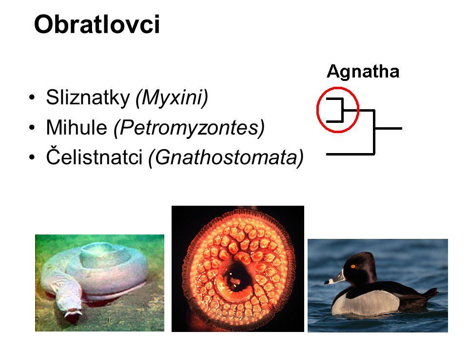 Obratlovci Sliznatky (Myxini) Mihule (Petromyzontes)