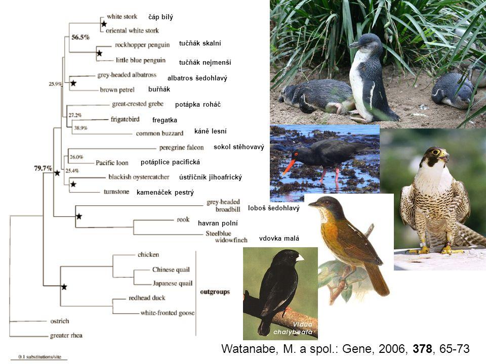 Watanabe, M. a spol.: Gene, 2006, 378, 65-73
