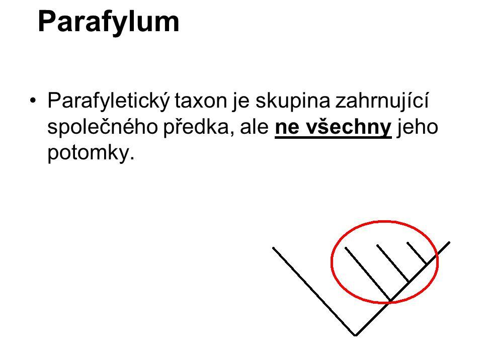 Parafylum Parafyletický taxon je skupina zahrnující společného předka, ale ne všechny jeho potomky.