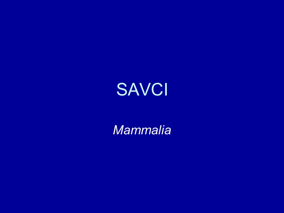 SAVCI Mammalia