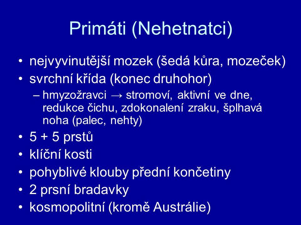 Primáti (Nehetnatci) nejvyvinutější mozek (šedá kůra, mozeček)