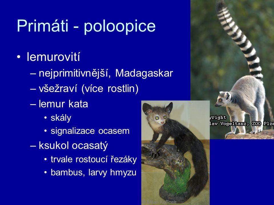 Primáti - poloopice lemurovití nejprimitivnější, Madagaskar