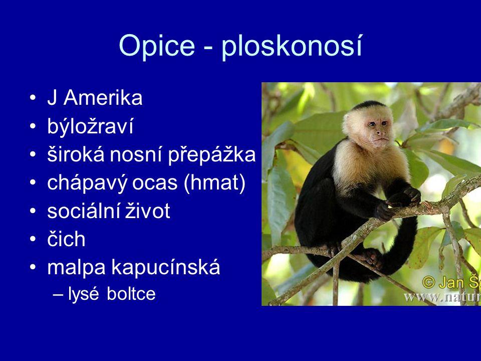 Opice - ploskonosí J Amerika býložraví široká nosní přepážka