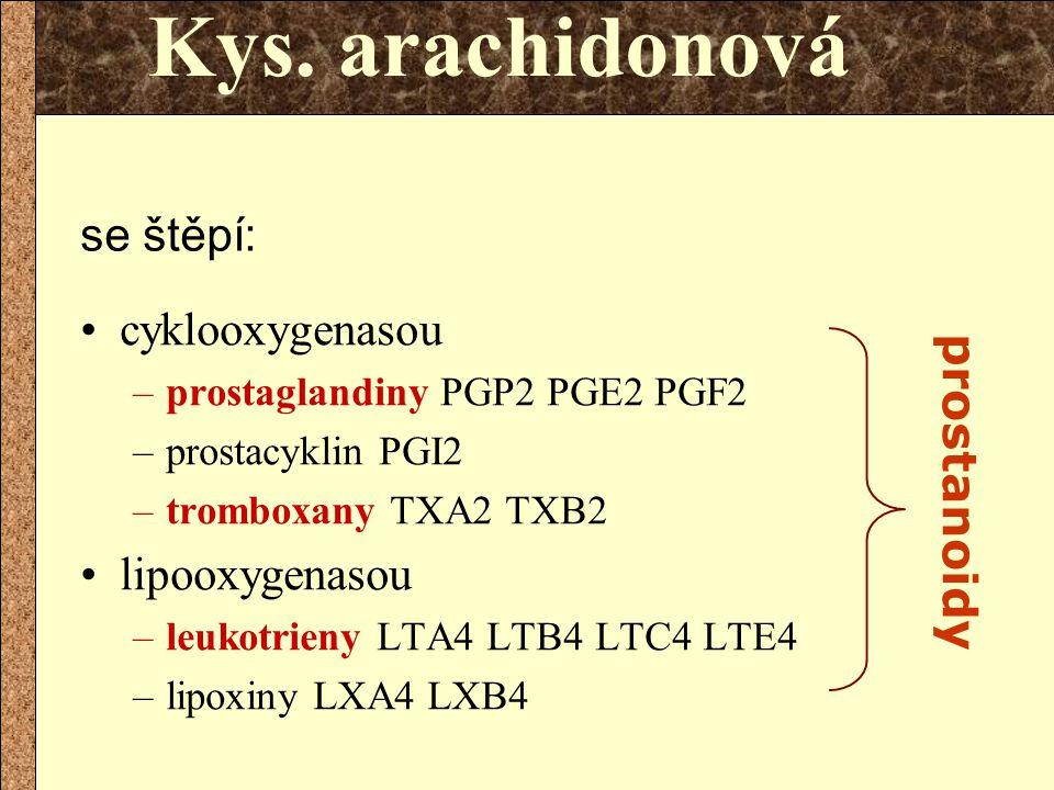 Kys. arachidonová se štěpí: cyklooxygenasou prostanoidy lipooxygenasou