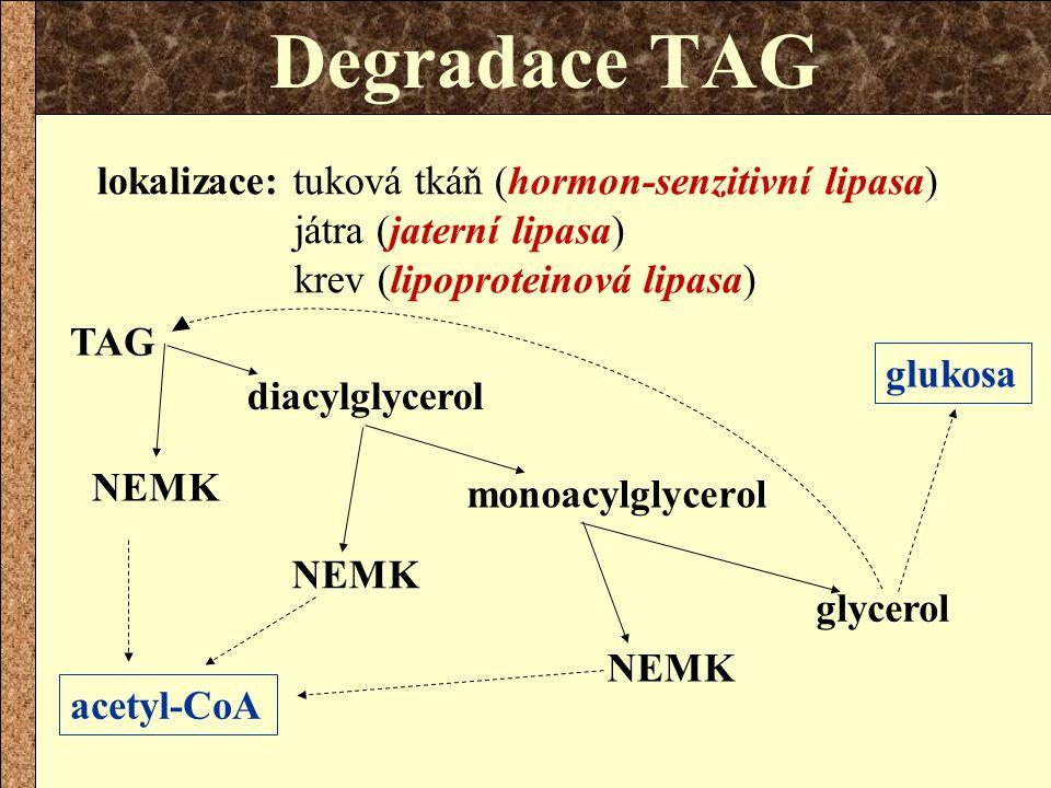 Degradace TAG lokalizace: tuková tkáň (hormon-senzitivní lipasa) játra (jaterní lipasa) krev (lipoproteinová lipasa)