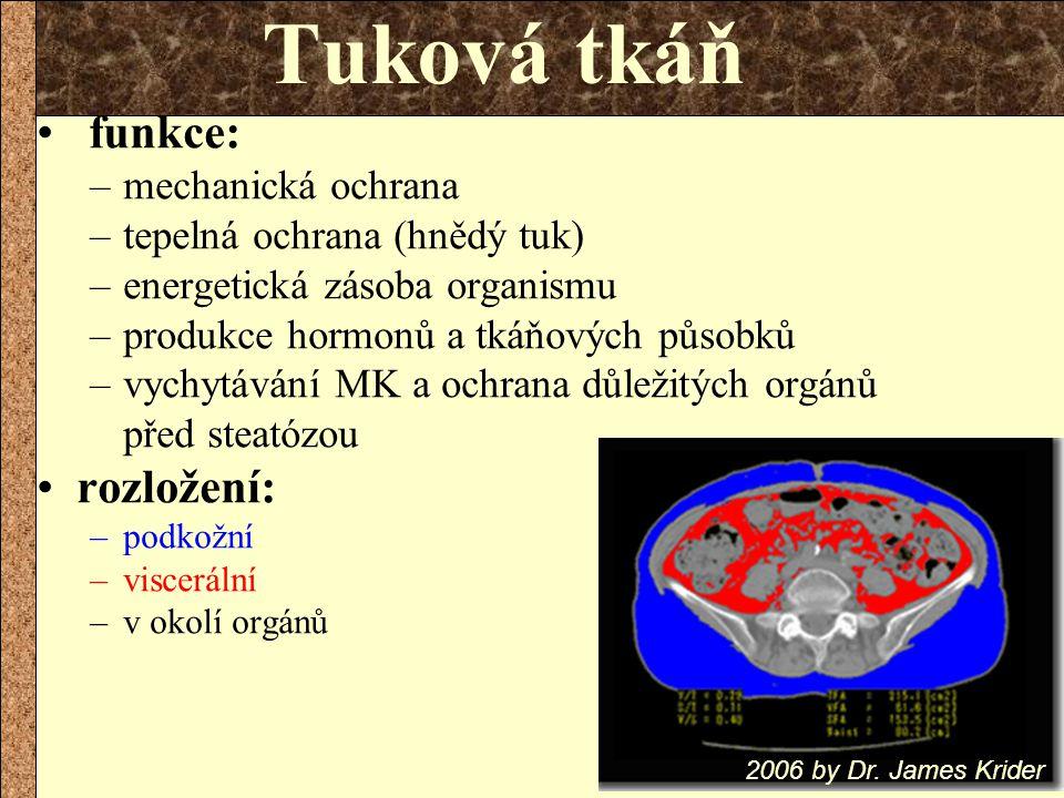 Tuková tkáň funkce: rozložení: mechanická ochrana