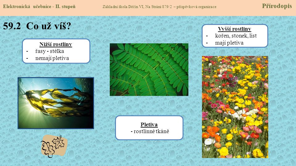 59.2 Co už víš Vyšší rostliny kořen, stonek, list mají pletiva