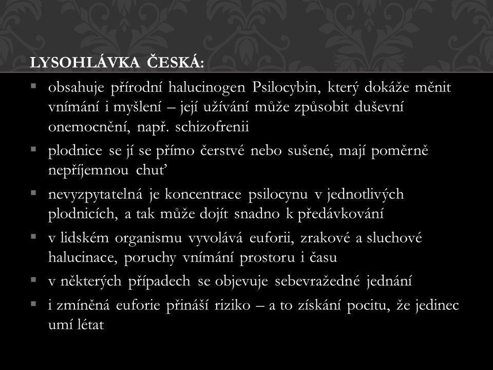 LYSOHLÁVKA ČESKÁ: