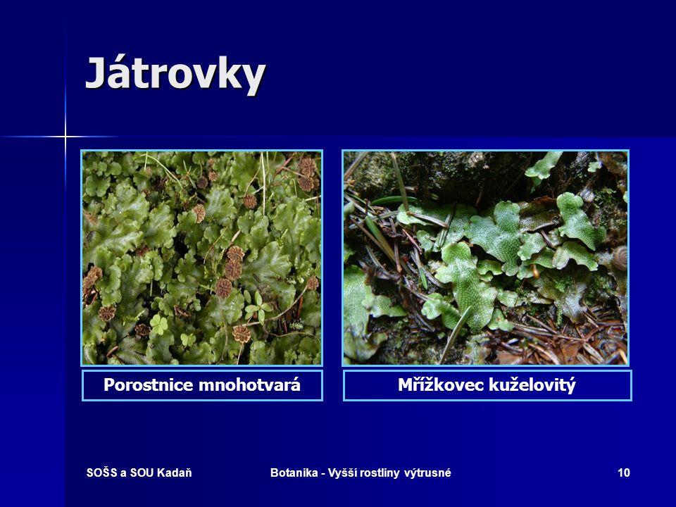 Porostnice mnohotvará Botanika - Vyšší rostliny výtrusné