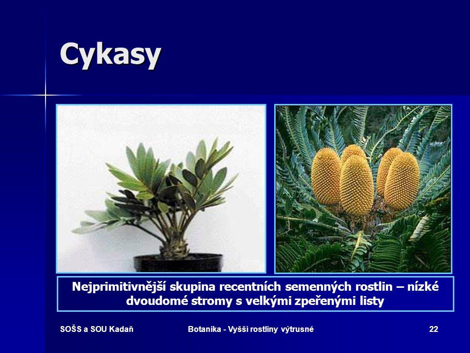 Botanika - Vyšší rostliny výtrusné