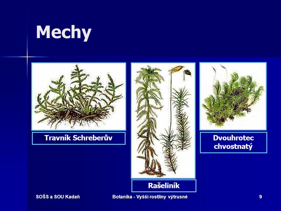 Dvouhrotec chvostnatý Botanika - Vyšší rostliny výtrusné
