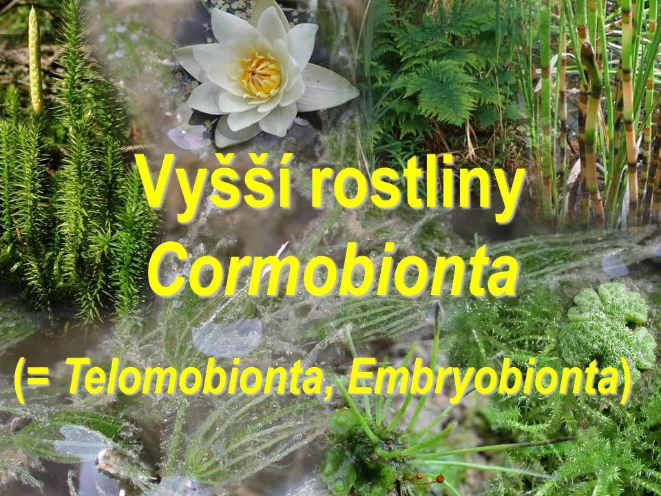 Vyšší rostliny Cormobionta