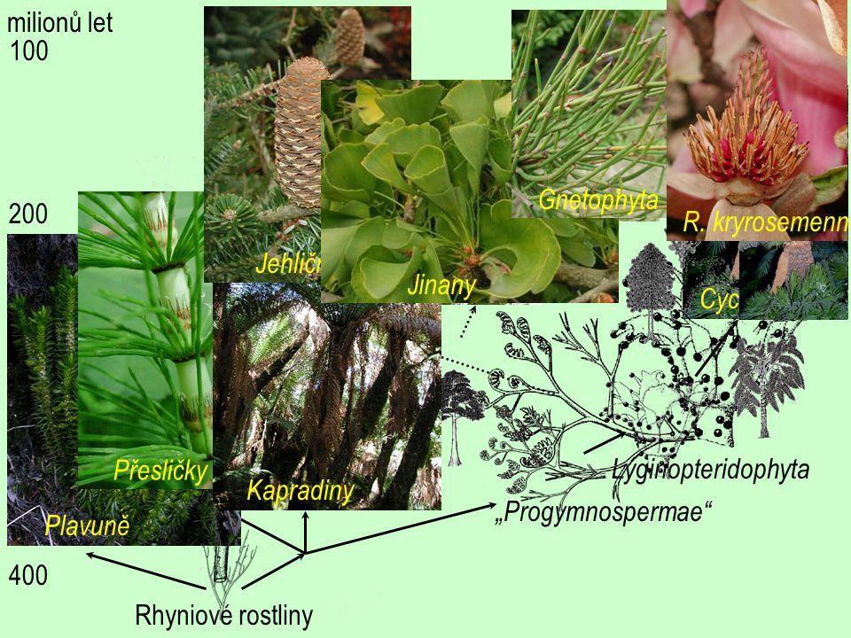 milionů let R. kryrosemenné. Jehličnany. Gnetophyta. 100. Jinany. Cycadophyta. Rhyniové rostliny.