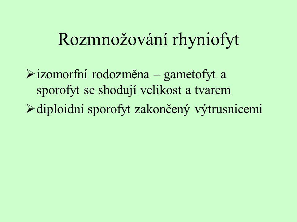 Rozmnožování rhyniofyt