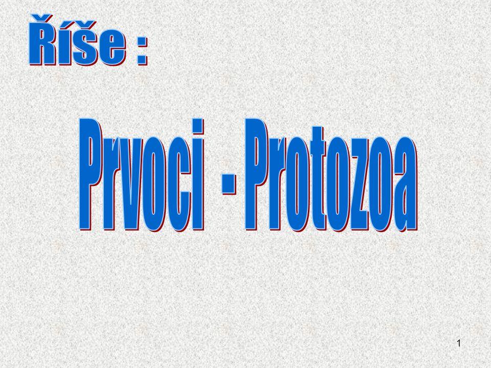 Říše : Prvoci - Protozoa