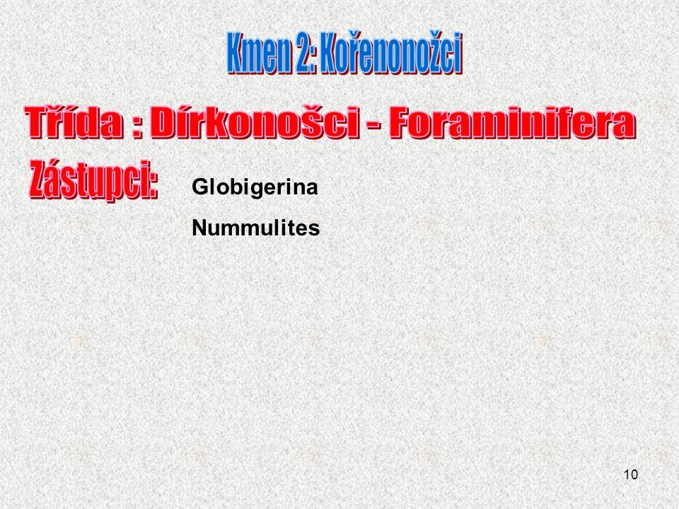 Třída : Dírkonošci - Foraminifera