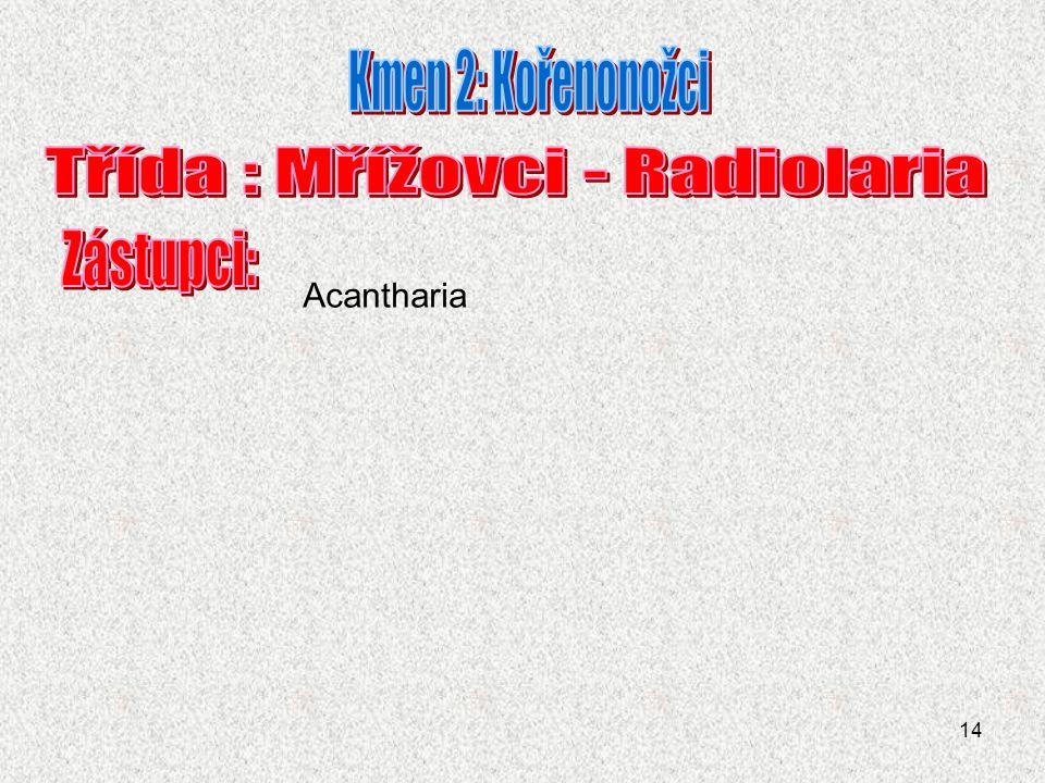 Třída : Mřížovci - Radiolaria