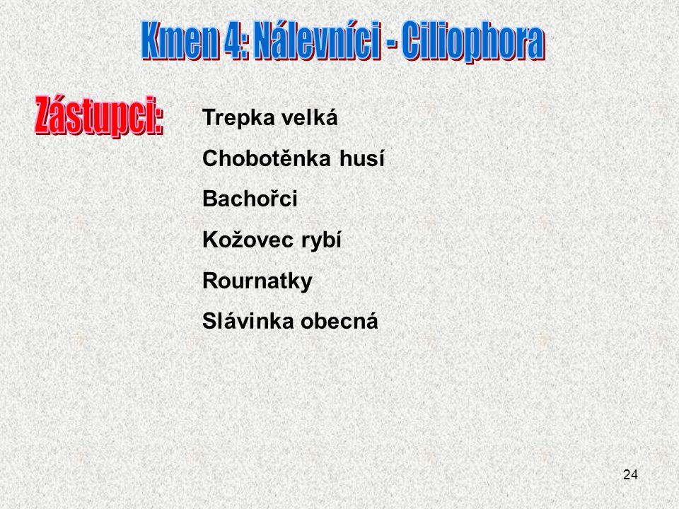 Kmen 4: Nálevníci - Ciliophora