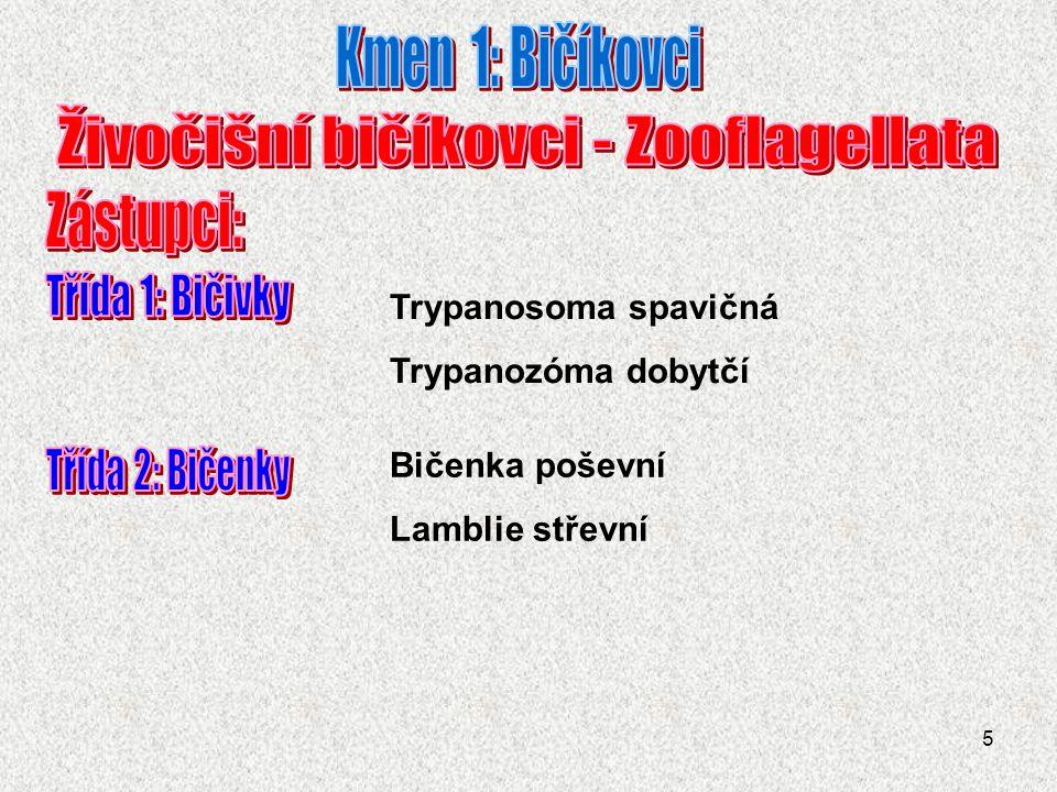 Živočišní bičíkovci - Zooflagellata