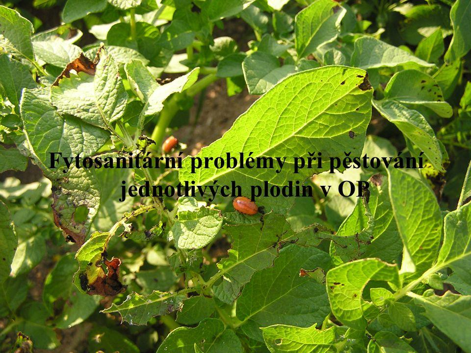 Fytosanitární problémy při pěstování jednotlivých plodin v OP