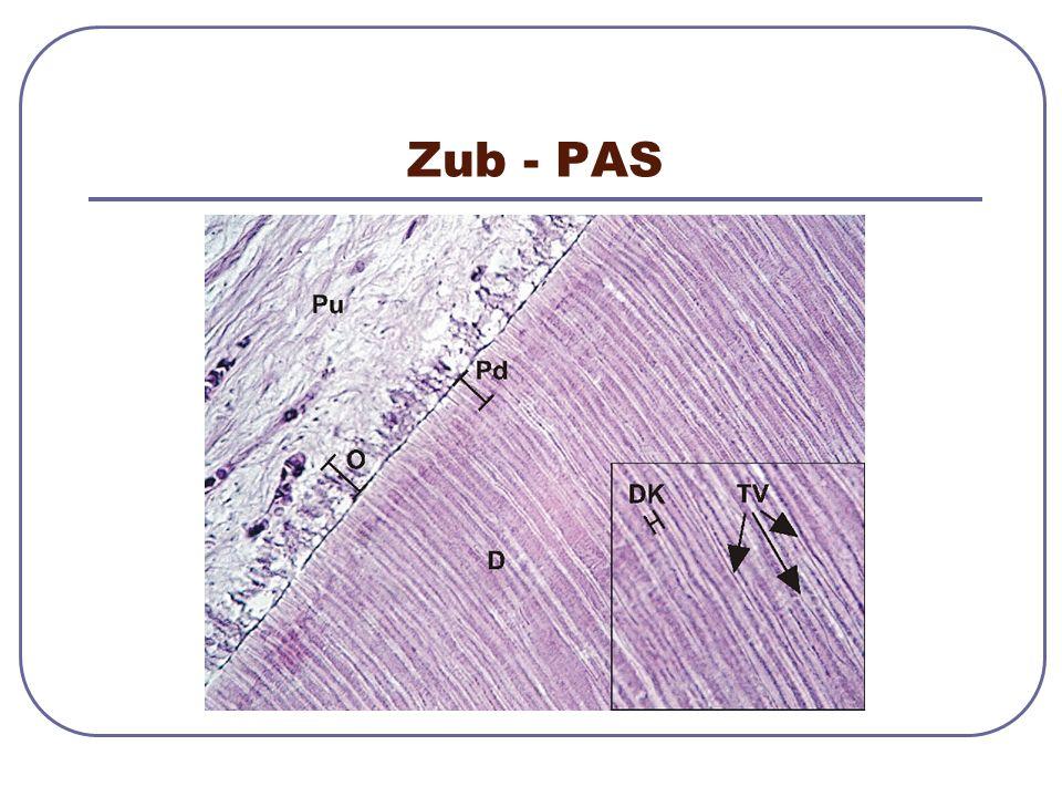 Zub - PAS