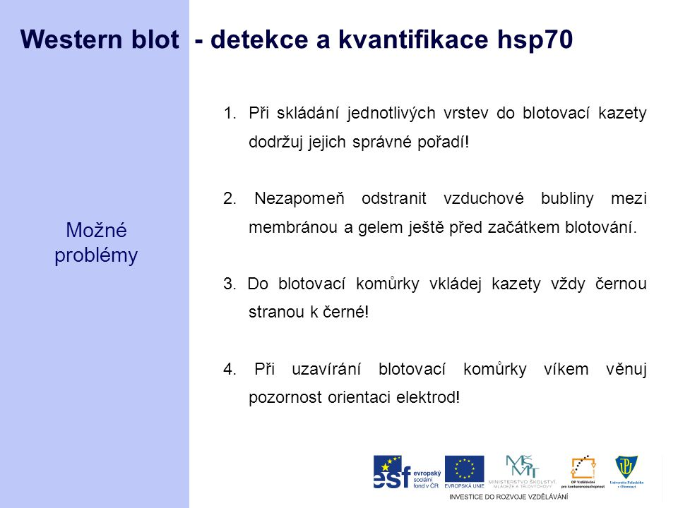 Western blot - detekce a kvantifikace hsp70