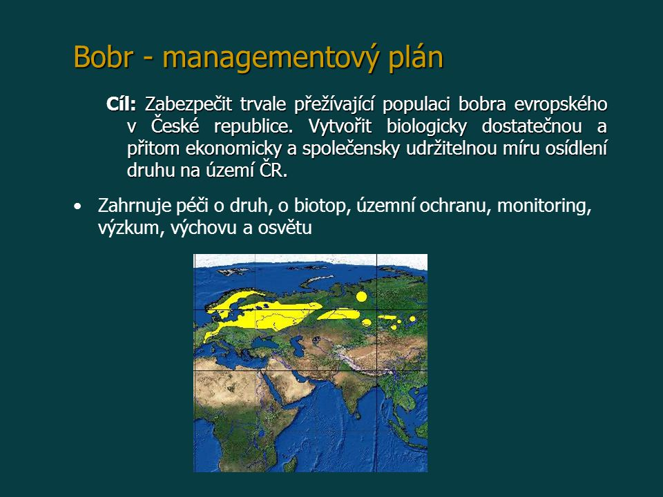 Bobr - managementový plán