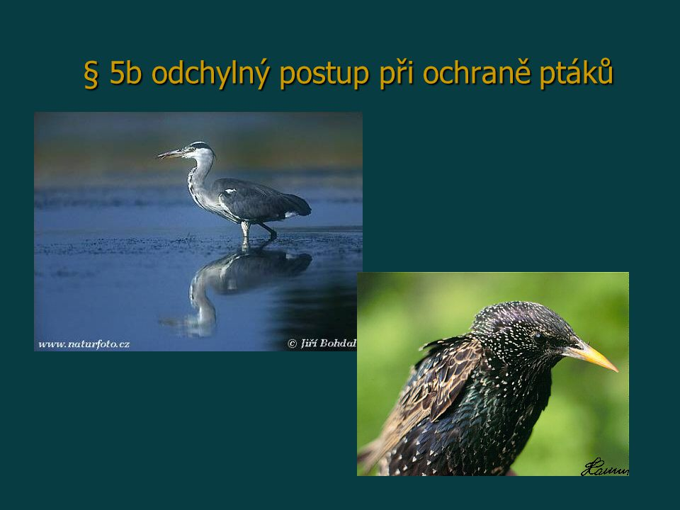 § 5b odchylný postup při ochraně ptáků
