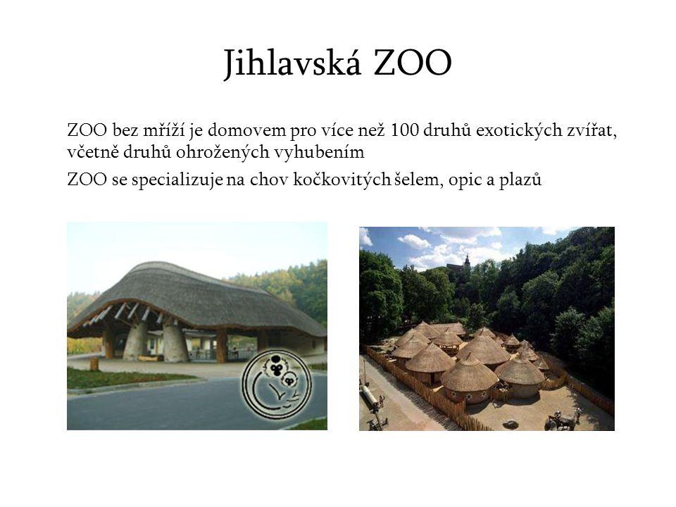 Jihlavská ZOO ZOO bez mříží je domovem pro více než 100 druhů exotických zvířat, včetně druhů ohrožených vyhubením.