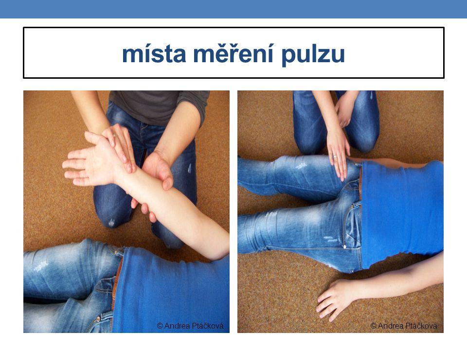 místa měření pulzu © Andrea Ptáčková © Andrea Ptáčková