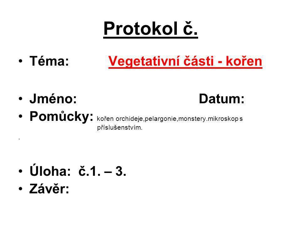 Protokol č. Téma: Vegetativní části - kořen Jméno: Datum: