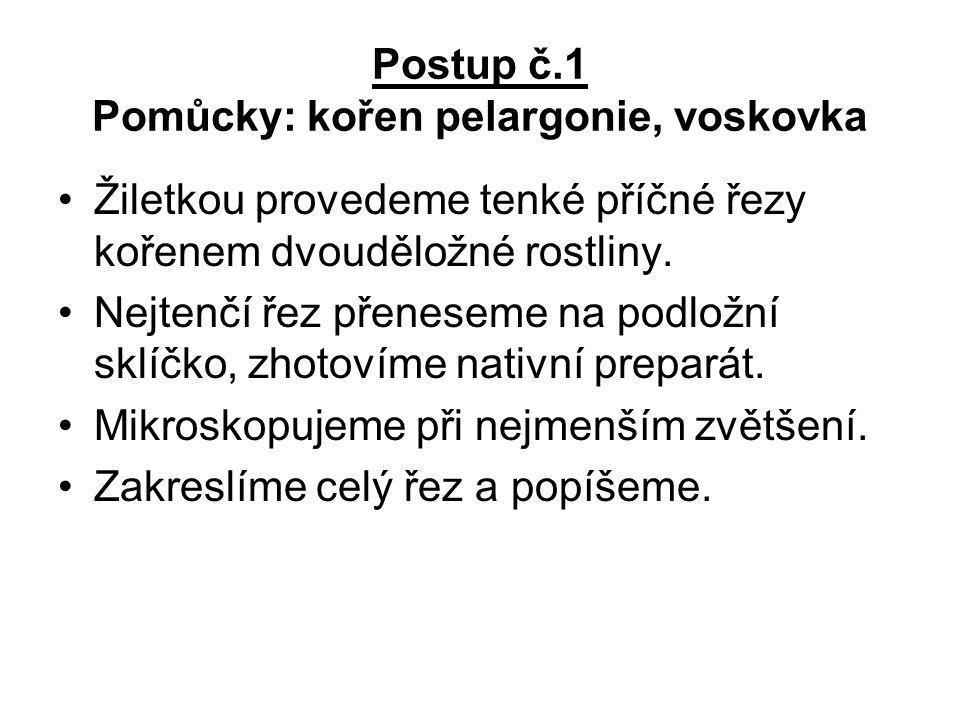 Postup č.1 Pomůcky: kořen pelargonie, voskovka