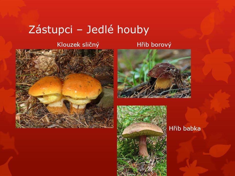 Zástupci – Jedlé houby Klouzek sličný Hřib borový Hřib babka