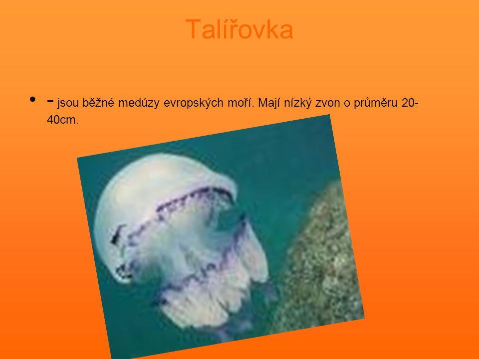 Talířovka - jsou běžné medúzy evropských moří. Mají nízký zvon o průměru 20-40cm.
