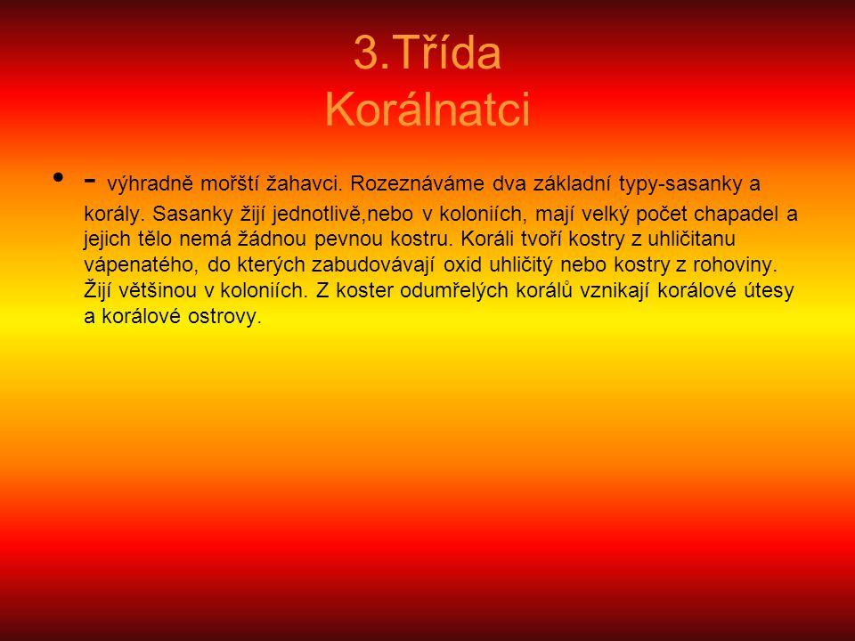 3.Třída Korálnatci