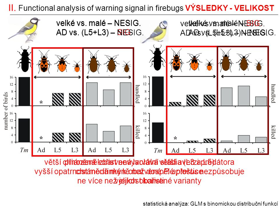 II. Functional analysis of warning signal in firebugs VÝSLEDKY - VELIKOST