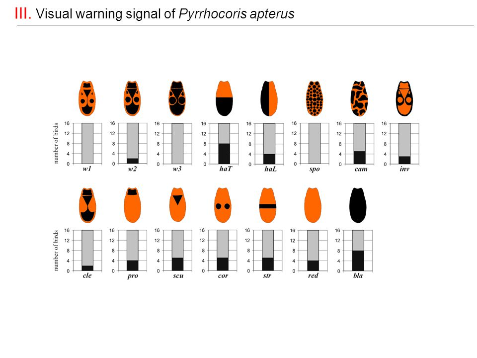 III. Visual warning signal of Pyrrhocoris apterus