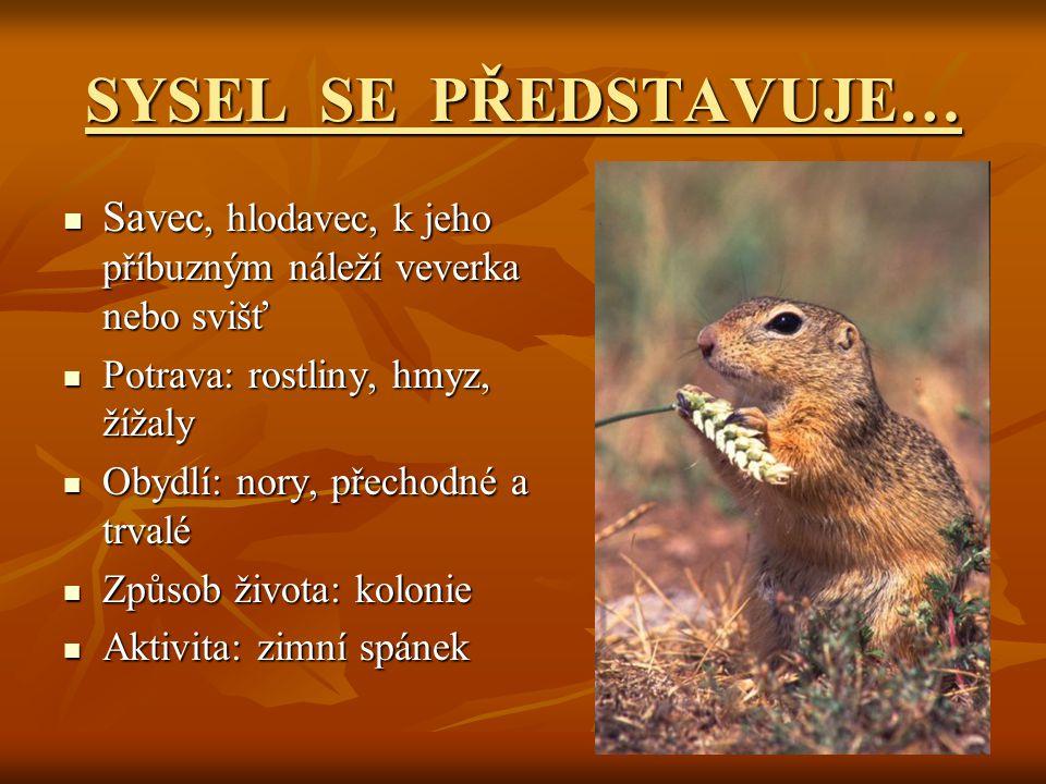 SYSEL SE PŘEDSTAVUJE… Savec, hlodavec, k jeho příbuzným náleží veverka nebo svišť. Potrava: rostliny, hmyz, žížaly.