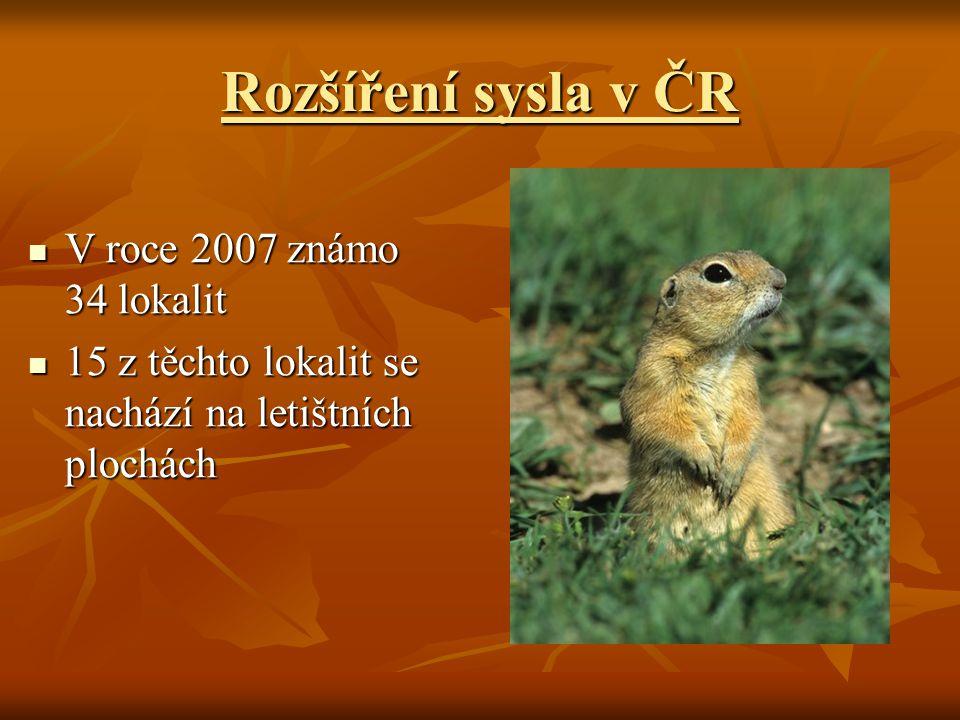 Rozšíření sysla v ČR V roce 2007 známo 34 lokalit